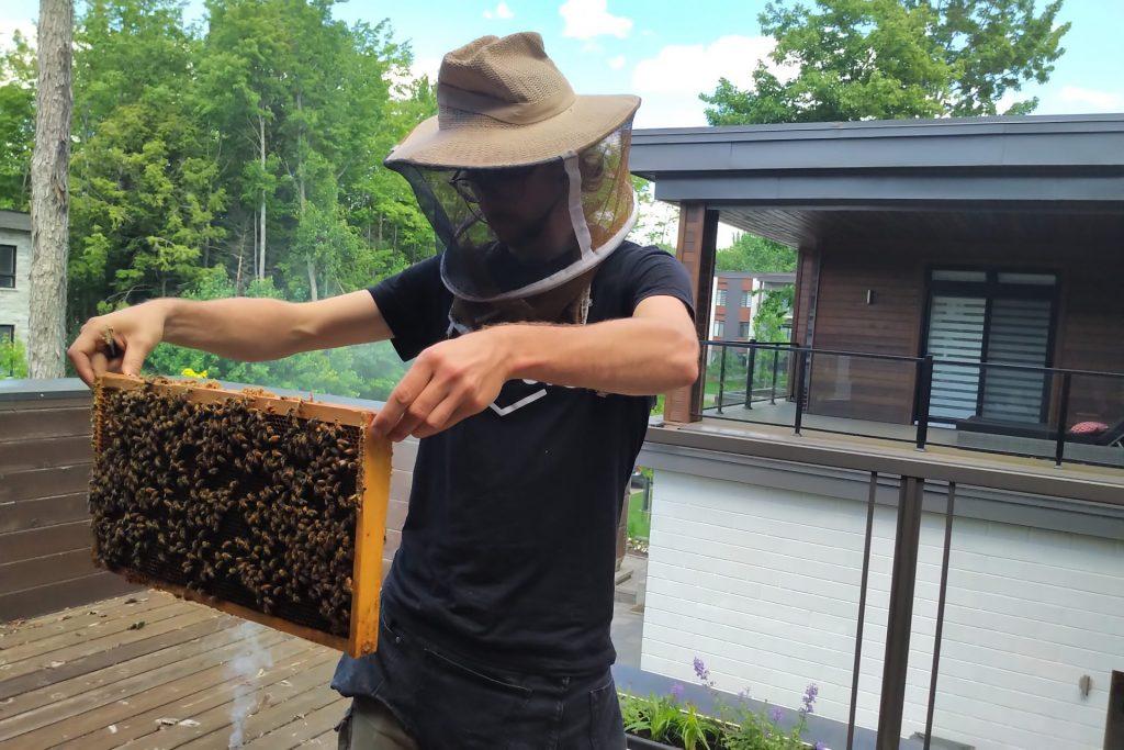 Une ruche sur nos toits pour la protection des abeilles Alvéole