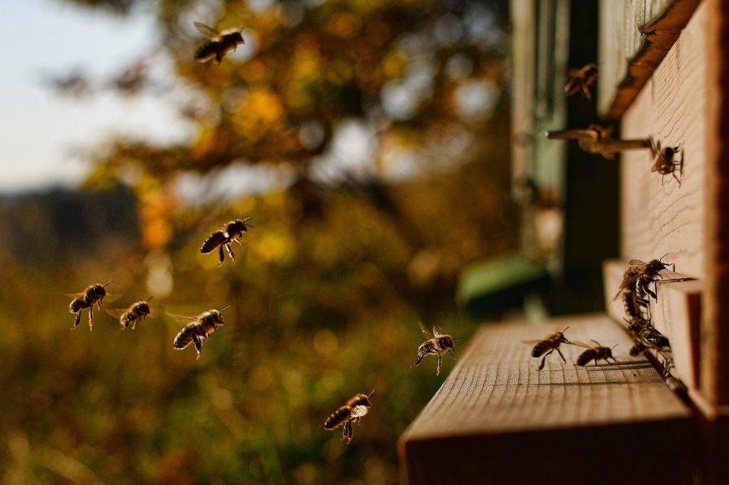 abeille pollinisateur