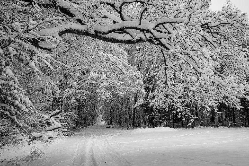 Promenade hiver